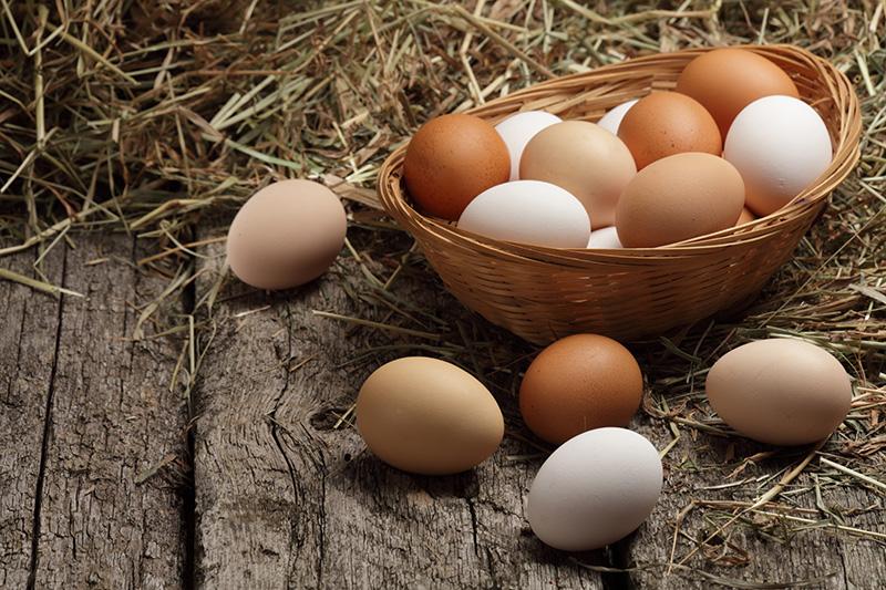 matvare: egg