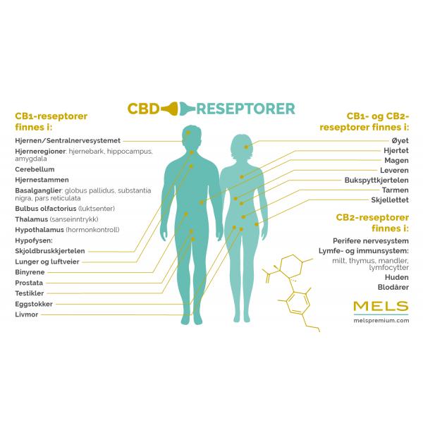 CBD reseptorer